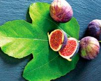 Üzüm, zeytin, Ege güneşi, incir, kadınlar…
